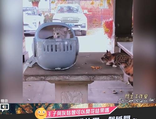 【當流浪貓遇上家貓的那一個瞬間~】